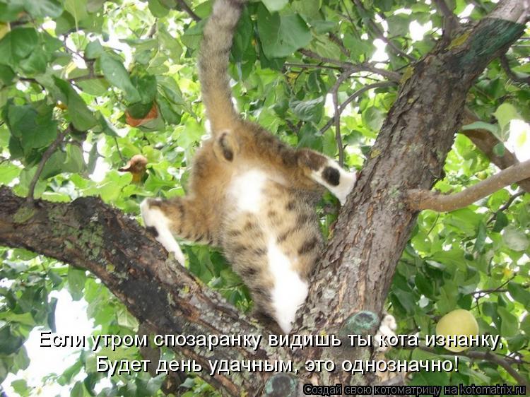 Котоматрица: Если утром спозаранку видишь ты кота изнанку, Будет день удачным, это однозначно!
