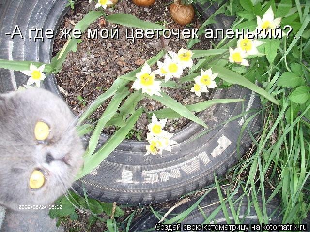Котоматрица: -А где же мой цветочек аленький?..