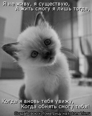 Котоматрица: Когда я вновь тебя увижу, Когда обнять смогу тебя! Я не живу, я существую, А жить смогу я лишь тогда,