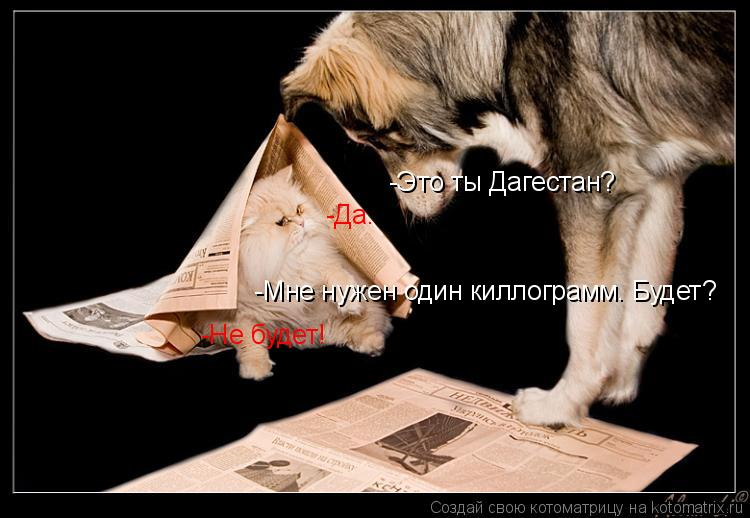 Котоматрица: -Это ты Дагестан? -Да. -Мне нужен один киллограмм. Будет? -Не будет!