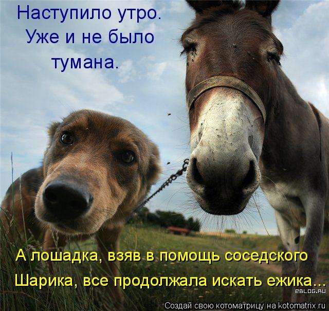 Котоматрица: Наступило утро. Уже и не было тумана. А лошадка, взяв в помощь соседского Шарика, все продолжала искать ежика...