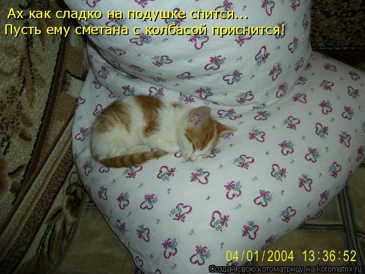 Котоматрица: Ах как сладко на подушке спится... Пусть ему сметана с колбасой приснится!