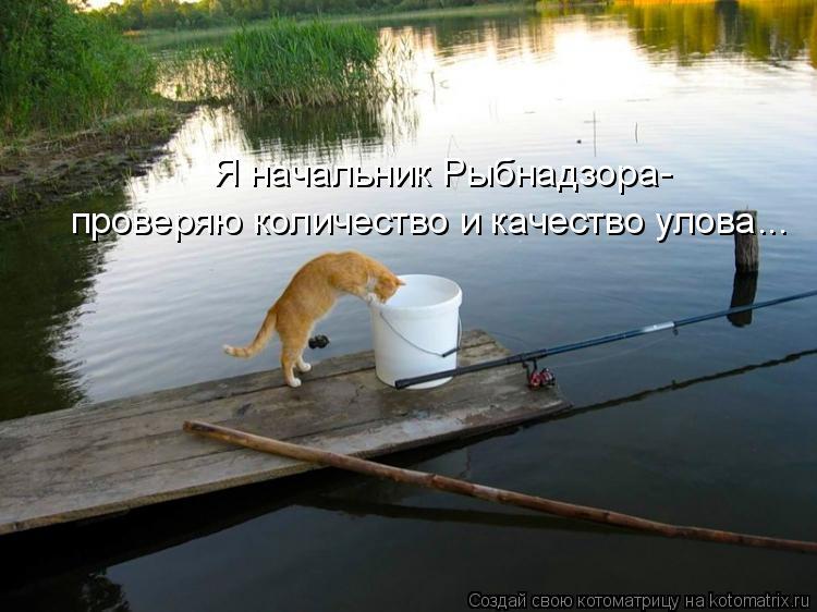 Котоматрица: Я начальник Рыбнадзора- проверяю количество и качество улова...