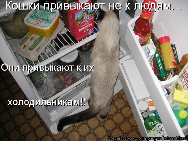 Котоматрица: Кошки привыкают не к людям... Они привыкают к их холодильникам!!