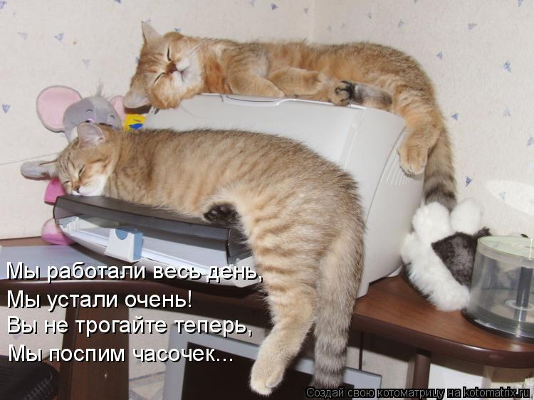 Котоматрица: Мы работали весь день, Мы устали очень! Вы не трогайте теперь, Мы поспим часочек...
