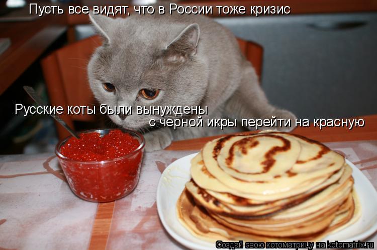 Котоматрица: Пусть все видят, что в России тоже кризис Русские коты были вынуждены  с черной икры перейти на красную