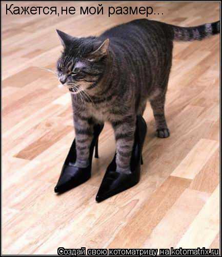 Котоматрица: Кажется,не мой размер...