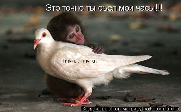 Котоматрица: Тик-так Тик-так Это точно ты съел мои часы!!!