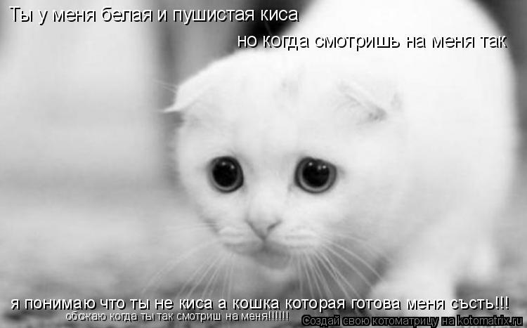 Котоматрица: Ты у меня белая и пушистая киса но когда смотришь на меня так я понимаю что ты не киса а кошка которая готова меня състь!!! обожаю когда ты так