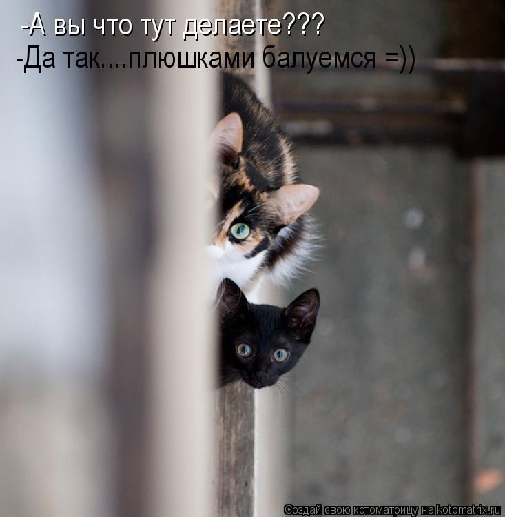 Котоматрица: -А вы что тут делаете??? -Да так....плюшками балуемся =))