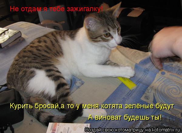 Котоматрица: Не отдам я тебе зажигалку! Курить бросай,а то у меня котята зелёные будут А виноват будешь ты!