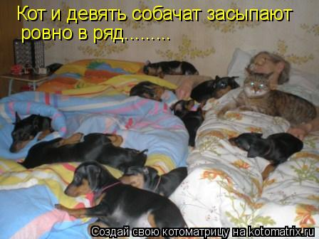 Котоматрица: Кот и девять собачат засыпают  ровно в ряд.........