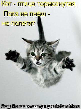 Котоматрица: Кот - птица тормознутая. Пока не пнёш -    не полетит