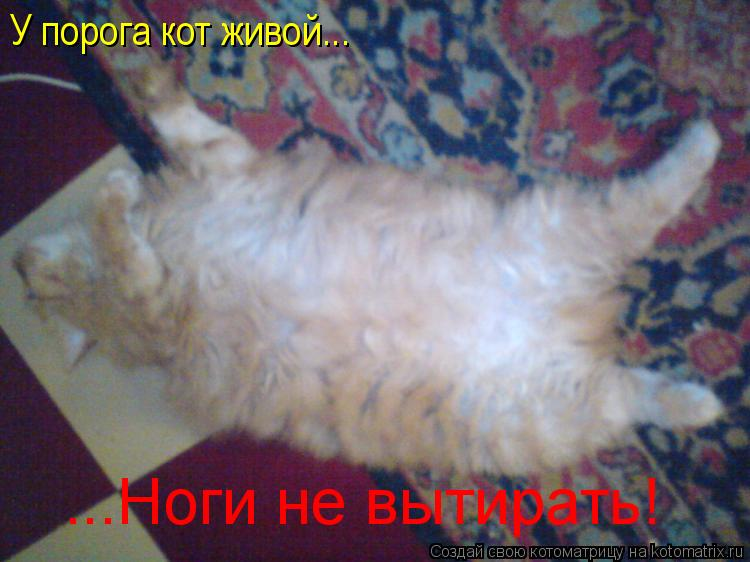 Котоматрица: У порога кот живой... ...Ноги не вытирать!