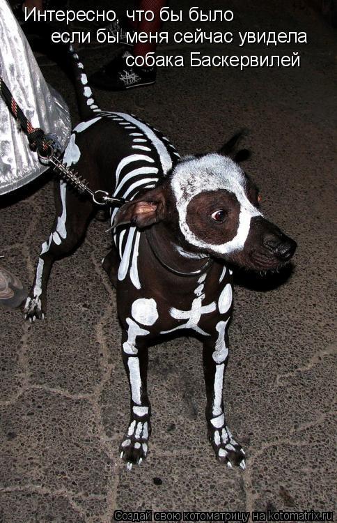 Котоматрица: Интересно, что бы было если бы меня сейчас увидела собака Баскервилей