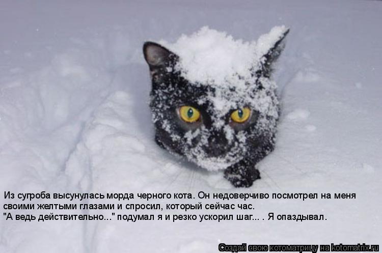"""Котоматрица: Из сугроба высунулась морда черного кота. Он недоверчиво посмотрел на меня своими желтыми глазами и спросил, который сейчас час. """"А ведь дей"""