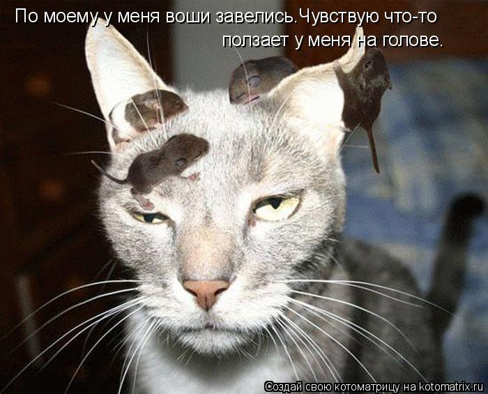 Котоматрица: По моему у меня воши завелись.Чувствую что-то  ползает у меня на голове.