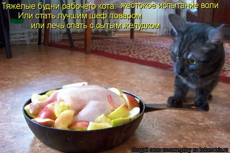 Котоматрица: Тяжёлые будни рабочего кота: Или стать лучшим шеф поваром или лечь спать с сытым желудком жестокое испытание воли