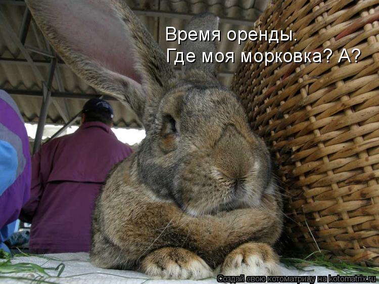 Котоматрица: Где моя морковка? А? Время оренды.