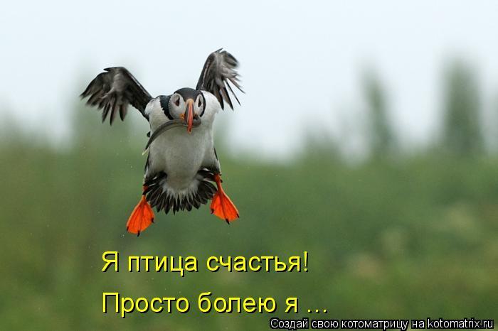 Котоматрица: Я птица счастья! Просто болею я ...