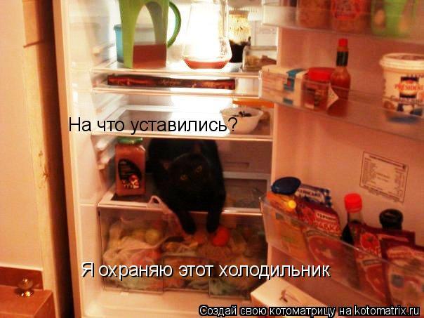 Котоматрица: На что уставились? Я охраняю этот холодильник