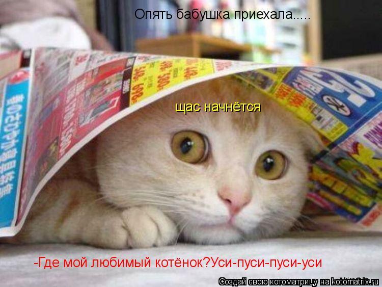 Котоматрица: Опять бабушка приехала..... щас начнётся -Где мой любимый котёнок?Уси-пуси-пуси-уси