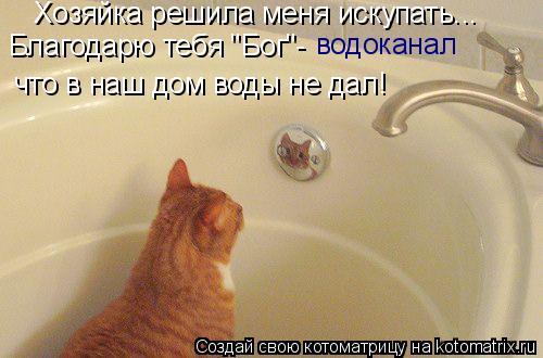 """Котоматрица: водоканал Благодарю тебя """"Бог""""- что в наш дом воды не дал! Хозяйка решила меня искупать..."""