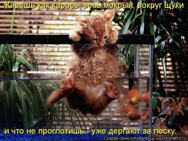Котоматрица: Живешь как карась: весь мокрый, вокруг щуки и что не проглотишь - уже дергают за леску.