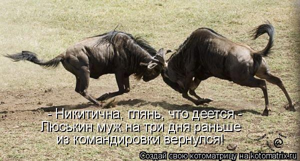 Котоматрица: - Никитична, глянь, что деется -  Люськин муж на три дня раньше   из командировки вернулся!