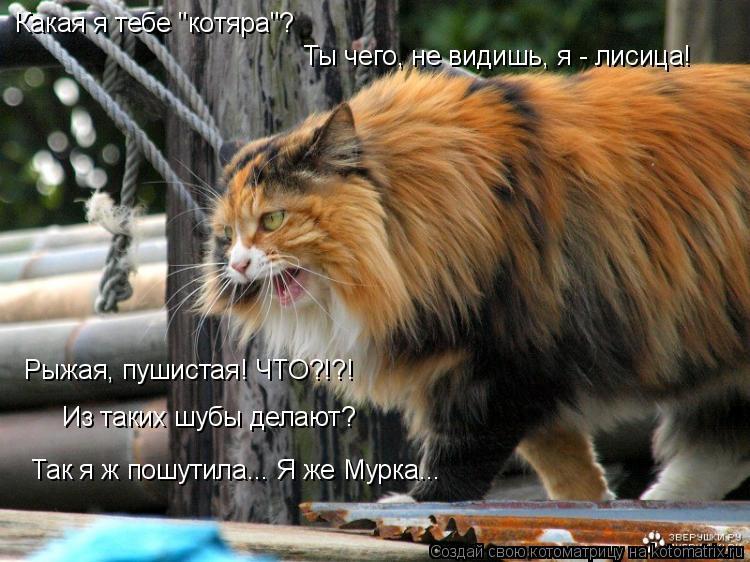 """Котоматрица: Ты чего, не видишь, я - лисица! Какая я тебе """"котяра""""? Рыжая, пушистая! ЧТО?!?! Из таких шубы делают? Так я ж пошутила... Я же Мурка..."""