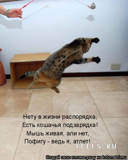Котоматрица: Нету в жизни распорядка, Есть кошачья подзарядка! Мышь живая, али нет, Пофигу - ведь я, атлет!