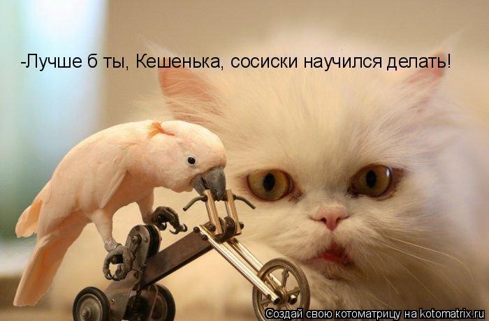 Котоматрица: -Лучше б ты, Кешенька, сосиски научился делать!