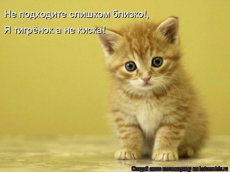 Котоматрица: Не подходите слишком близко!, Я тигрёнок а не киска!