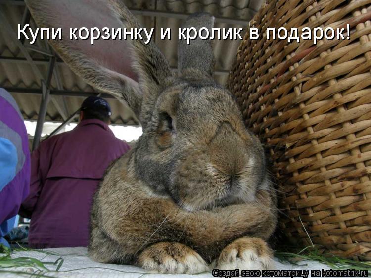 Котоматрица: Купи корзинку и кролик в подарок!