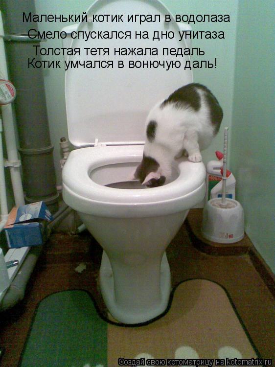 Котоматрица: Маленький котик играл в водолаза Смело спускался на дно унитаза Толстая тетя нажала педаль Котик умчался в вонючую даль!