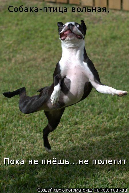 Котоматрица: Собака-птица вольная, Собака-птица вольная, Пока не пнёшь...не полетит