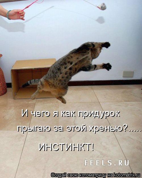 Котоматрица: И чего я как придурок прыгаю за этой хренью?....... ИНСТИНКТ!