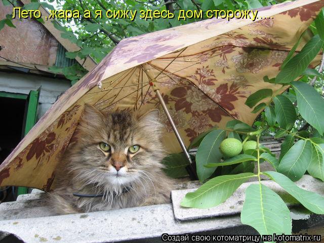 Котоматрица: Лето ,жара а я сижу здесь дом сторожу.....