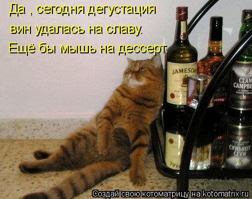 Котоматрица: Да , сегодня дегустация  вин удалась на славу. Ещё бы мышь на дессерт.