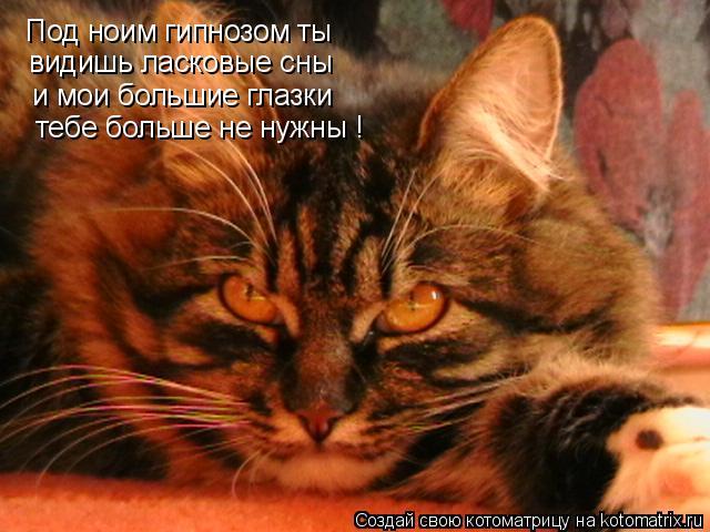 Котоматрица: Под ноим гипнозом ты видишь ласковые сны и мои большие глазки тебе больше не нужны !