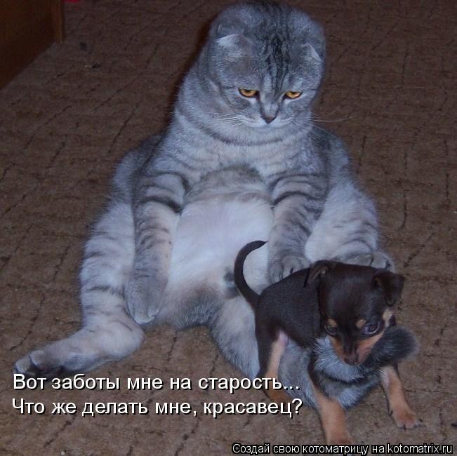 Котоматрица: Вот заботы мне на старость... Что же делать мне, красавец?