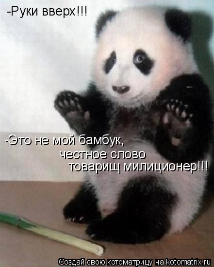 Котоматрица: -Руки вверх!!! -Это не мой бамбук, честное слово товарищ милиционер!!!