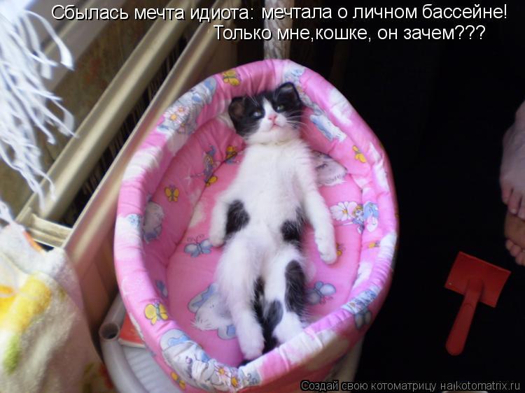 Котоматрица: Сбылась мечта идиота: мечтала о личном бассейне!  Только мне,кошке, он зачем???
