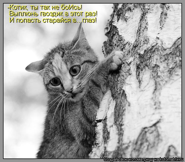 Котоматрица: -Котик, ты так не боИсь! Выплюнь гвоздик в этот раз! И попасть старайся в...глаз!