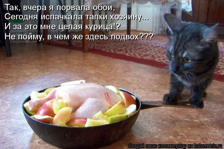 Котоматрица: Так, вчера я порвала обои, Сегодня испачкала тапки хозяину... И за это мне целая курица!? Не пойму, в чем же здесь подвох???