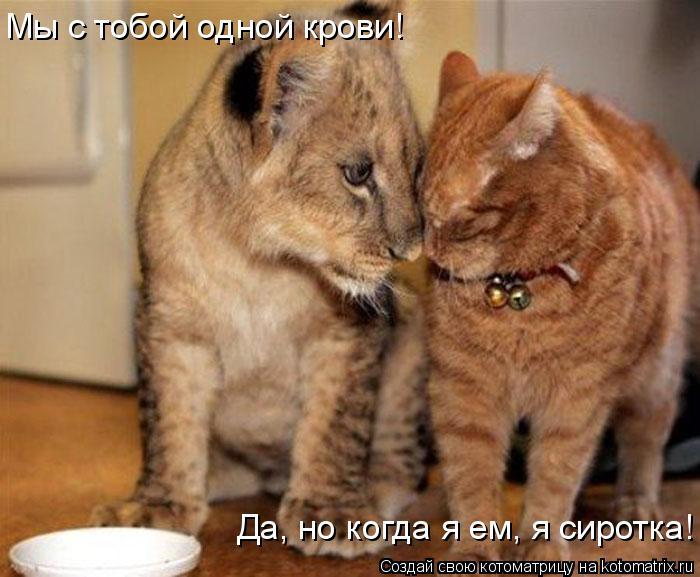 Котоматрица: Мы с тобой одной крови! Да, но когда я ем, я сиротка!
