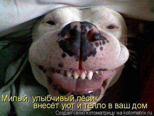 Котоматрица: Милый, улыбчивый пёсик внесёт уют и тепло в ваш дом