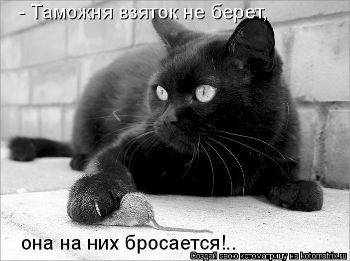 Котоматрица: - Таможня взяток не берет, она на них бросается!..