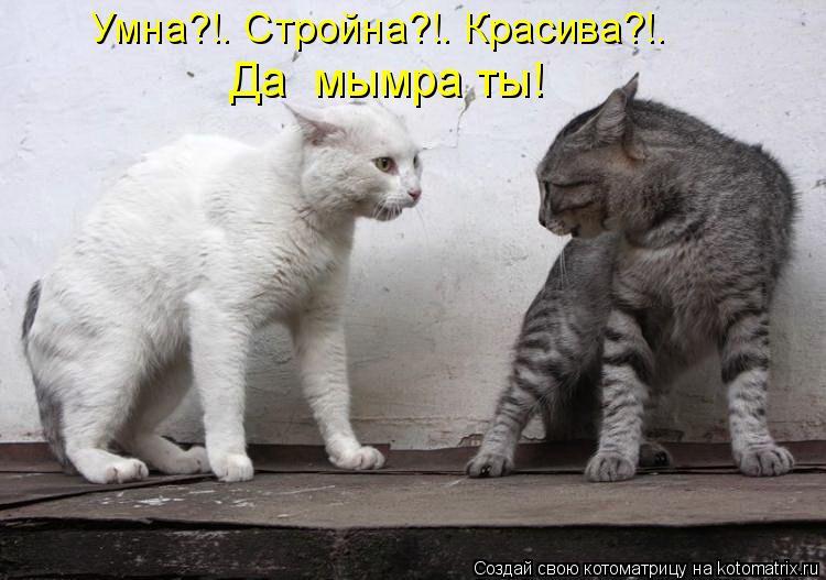 Котоматрица: Умна?!… Стройна?!… Красива?!…  Да  мымра ты!