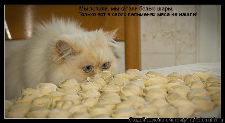 Котоматрица: Мы лепили, мы катали белые шары. Только вот в своих пельменях мяса не нашли!
